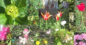 Flowers800